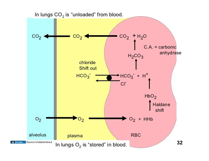 Carbonic >> 11.18.08(a): O2 and CO2 Transport