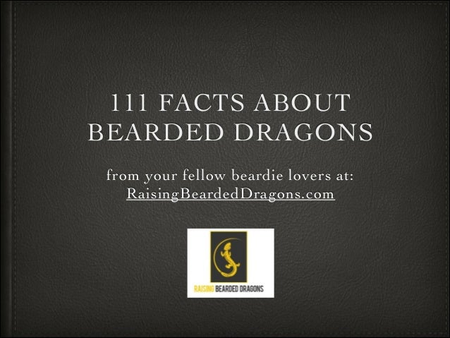 111 FACTS ABOUT BEARDED DRAGONS from your fellow beardie lovers at: RaisingBeardedDragons.com