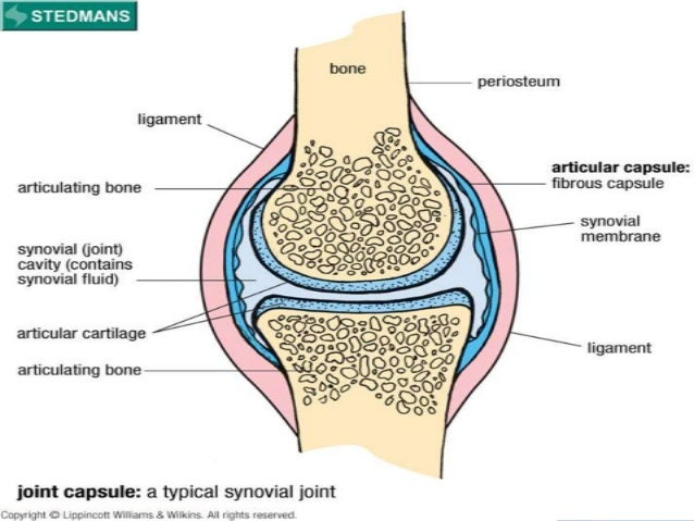 Introduction to Clinically Oriented Anatomy-Joints
