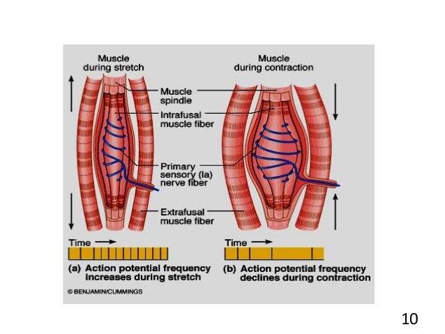 skeletal servomechanism