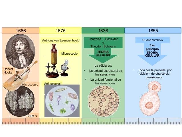 El Mundo Científico Teoría Celular Célula Procariota Y