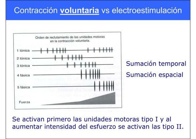 Contracción voluntaria vs electroestimulación Sumación temporal Sumación espacial Se activan primero las unidades motoras ...