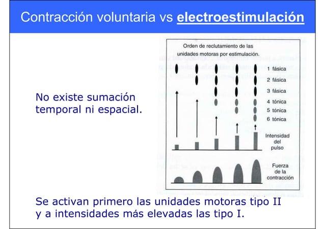 Contracción voluntaria vs electroestimulación Se activan primero las unidades motoras tipo II y a intensidades más elevada...
