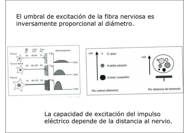 El umbral de excitación de la fibra nerviosa es inversamente proporcional al diámetro. La capacidad de excitación del impu...