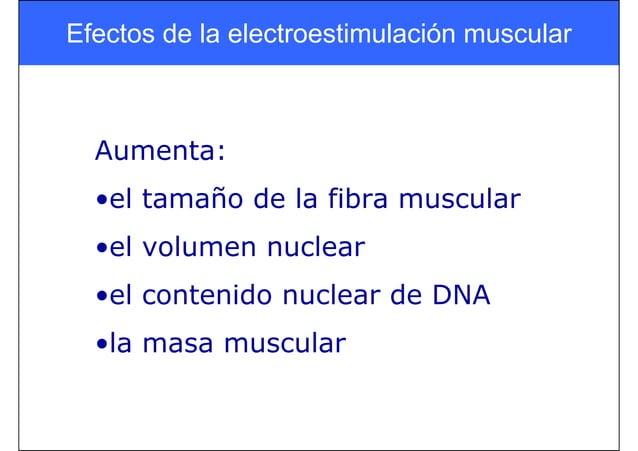 Efectos de la electroestimulación muscular Aumenta: •el tamaño de la fibra muscular •el volumen nuclear •el contenido nucl...