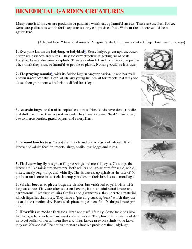BENEFICIAL GARDEN CREATURESMany beneficial insects are predators or parasites which eat up harmful insects. These are the ...