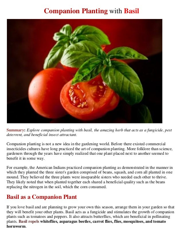 Companion Planting with BasilSummary: Explore companion planting with basil, the amazing herb that acts as a fungicide, pe...