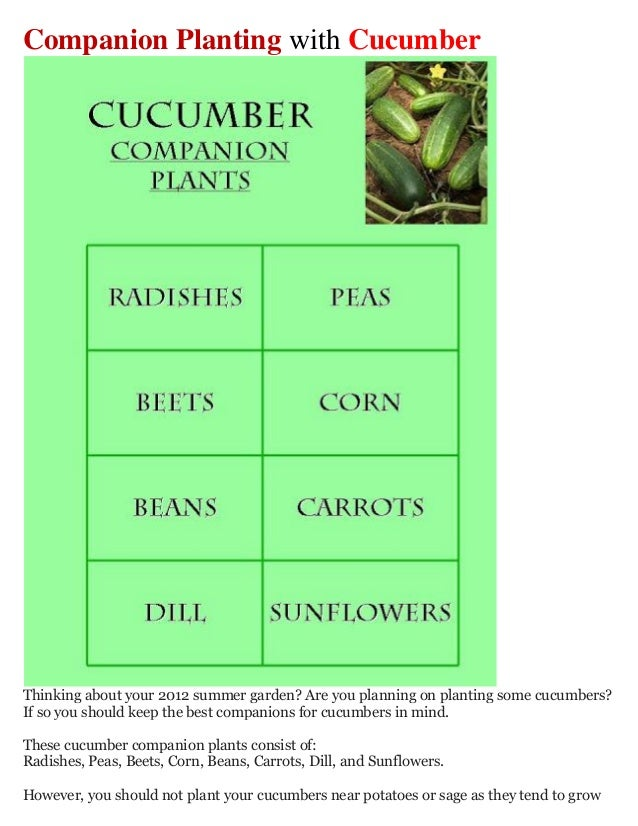 Companion Planting with CucumberThinking about your 2012 summer garden? Are you planning on planting some cucumbers?If so ...