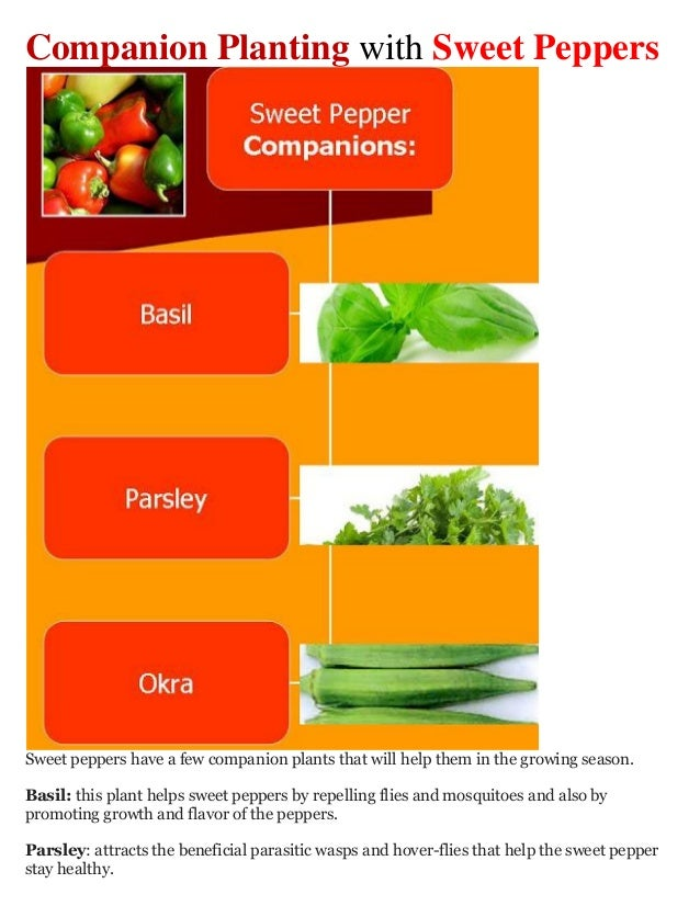 Companion Planting with Sweet PeppersSweet peppers have a few companion plants that will help them in the growing season.B...