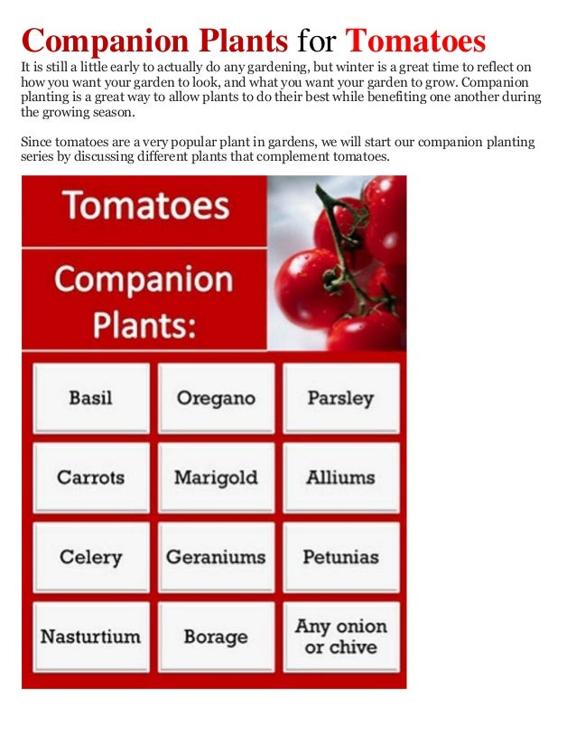 Companion Plants for TomatoesIt is still a little early to actually do any gardening, but winter is a great time to reflec...