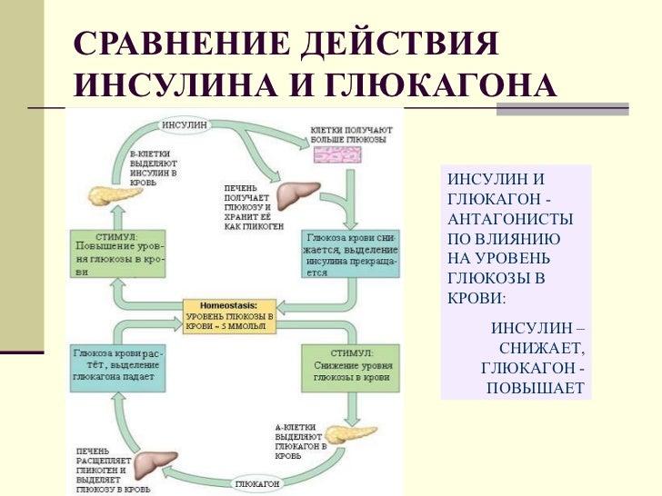 Биохимия регуляции