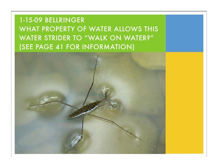 """1-15-09 BELLRINGER WHAT PROPERTY OF WATER ALLOWS THIS WATER STRIDER TO """"WALK ON WATER?"""" (SEE PAGE 41 FOR INFORMATION)"""