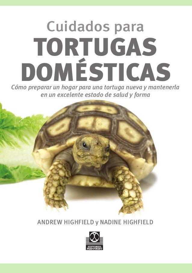 Com cuidar tortugas dom sticas for Villas tortuga celestino sinaloa