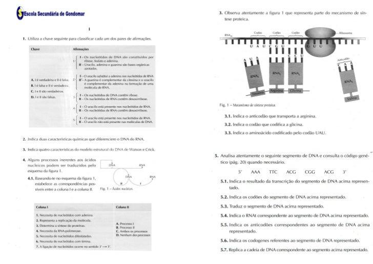 Ficha de Revisões 1  -  DNA e Síntese Proteica