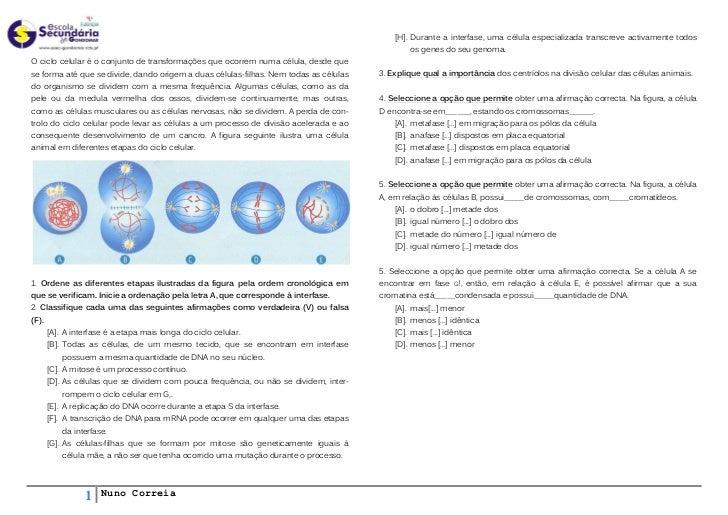 [H]. Durante a interfase, uma célula especializada transcreve activamente todos                                           ...