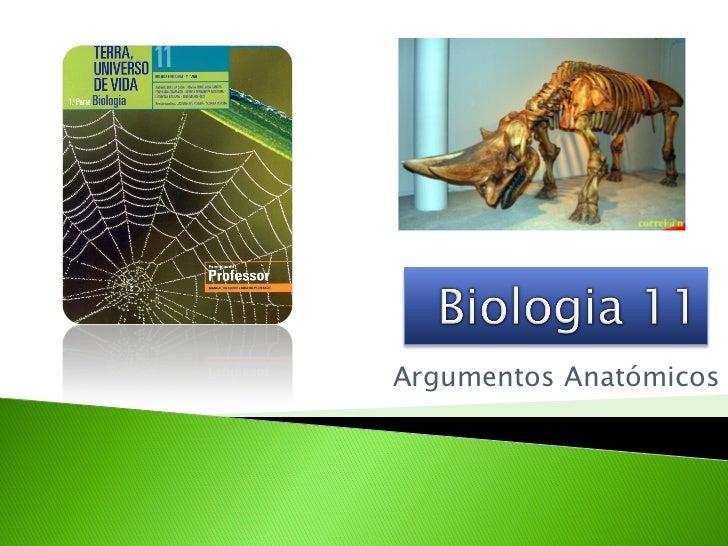 Argumentos Anatómicos