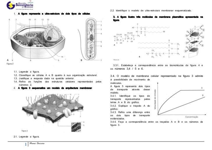 2.2. Identifique o modelo de ultra-estrutura membranar esquematizado.1.     A figura representa a ultra-estrutura de dois ...