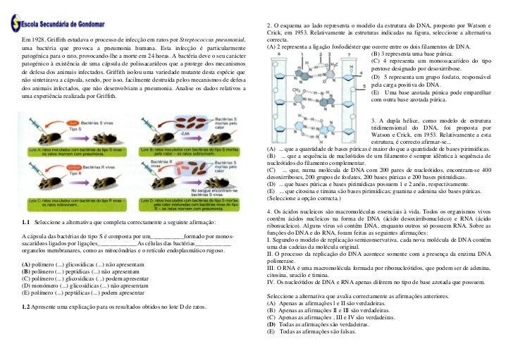 2. O esquema ao lado representa o modelo da estrutura do DNA, proposto por Watson e                                       ...