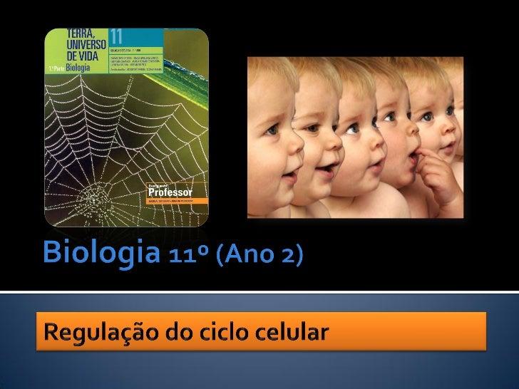 Nuno Correia 10711