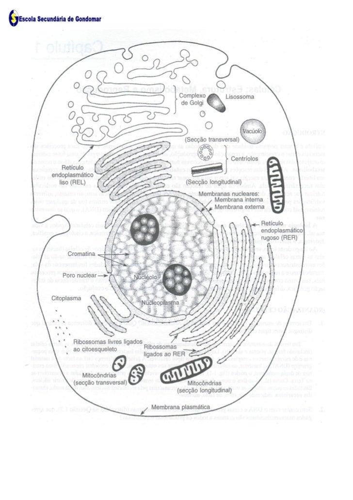 Ficha Informativa - Esquema da Célula