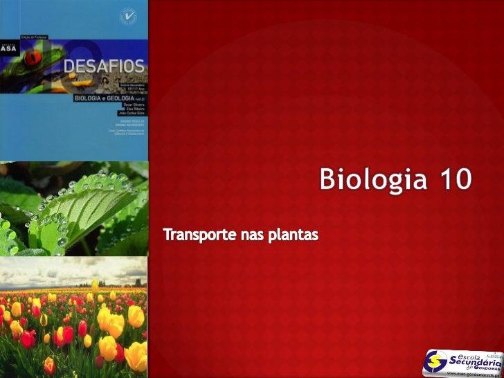 As plantas sintetizam compostos orgânicos a               nível das folhas              Nuno Correia 10/11