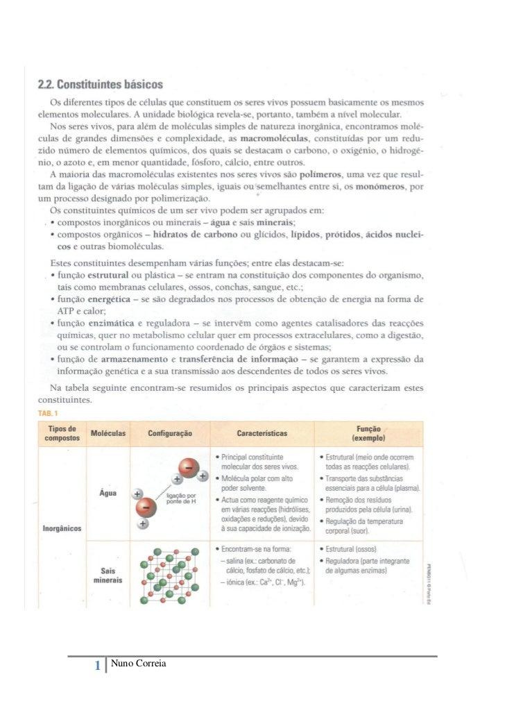 1   Nuno Correia