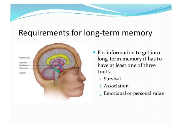 long term memory and its effects on critical thinking Long term memory and critical thinking the brain is truly a fascinating organ of the human body the way it functions is still a mystery that researchers are trying to unravel.