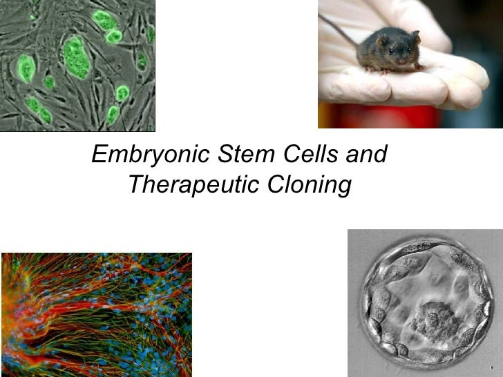 Embryonic Stem Cells and Therapeutic Cloning