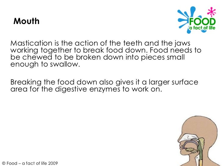 Mouth <ul><li>Mastication is the action of the teeth and the jaws working together to break food down. Food needs to be ch...