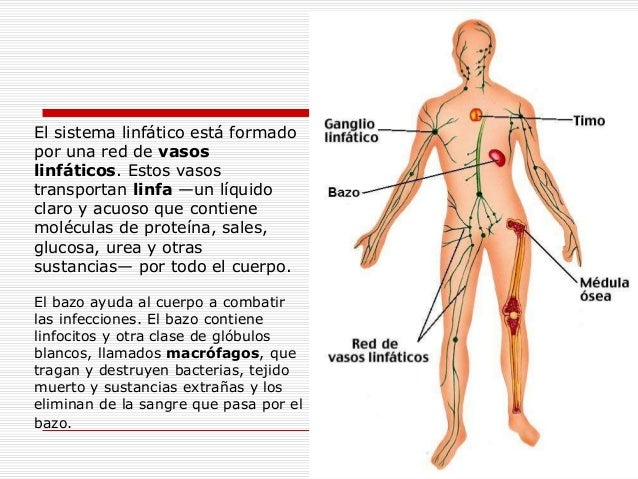 11 areas donde opera el quiromasaje[1]