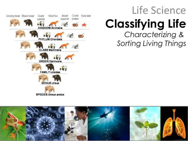 Life Science Classifying Life Characterizing & Sorting Living Things