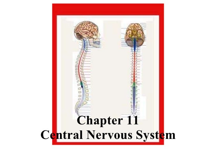 Chapter 11 Central Nervous System