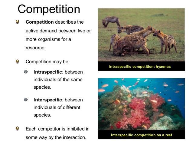 11 Ecology