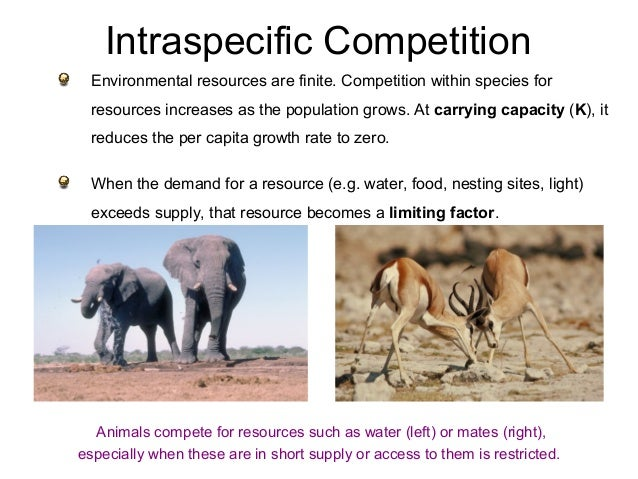intra and interspecific relationship