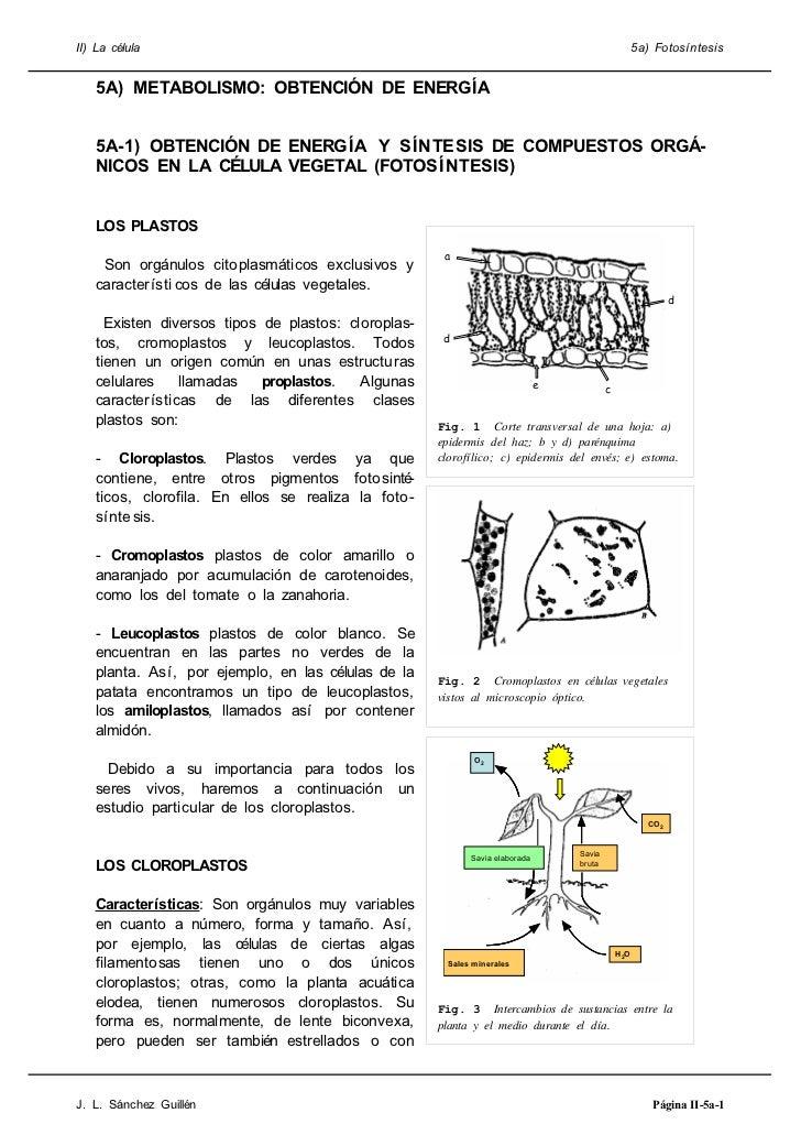 II) La célula                                                                                      5a) Fotosíntesis   5A) ...