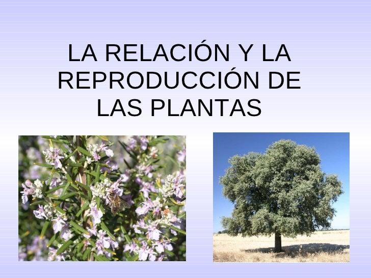 LA RELACIÓN Y LA REPRODUCCIÓN DE LAS PLANTAS