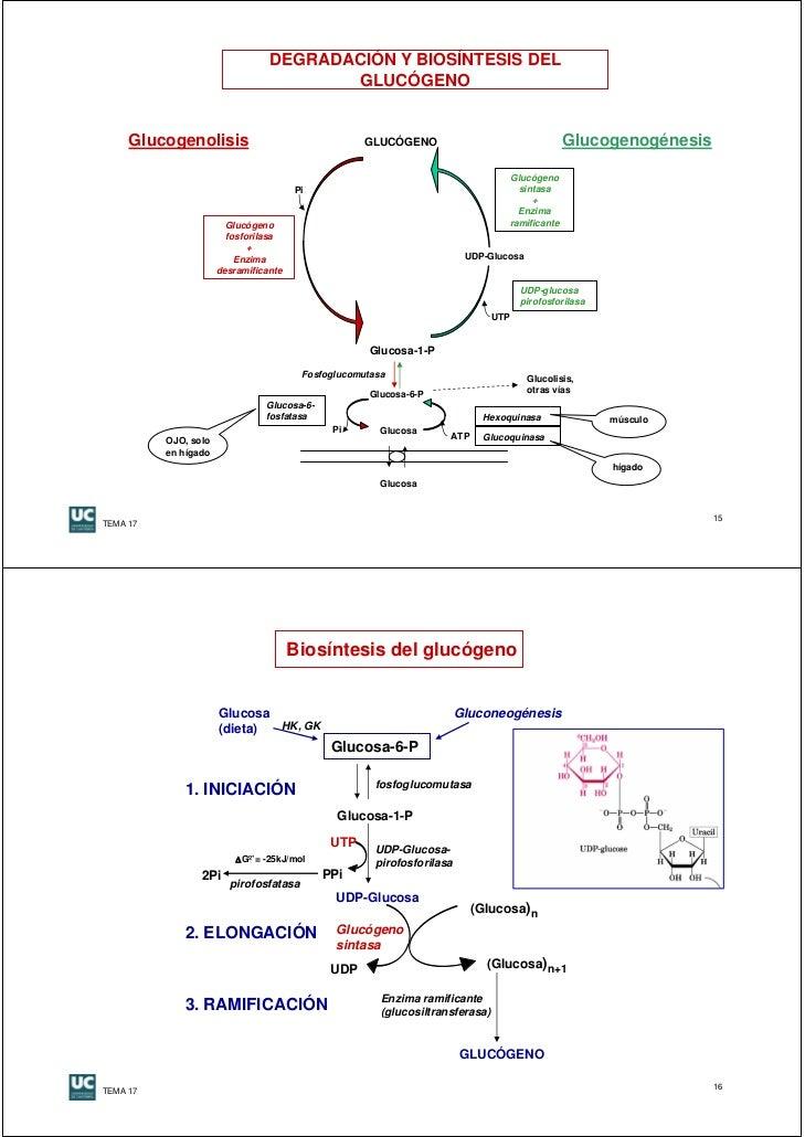 La Dieta del Metabolismo acelerado pdf download