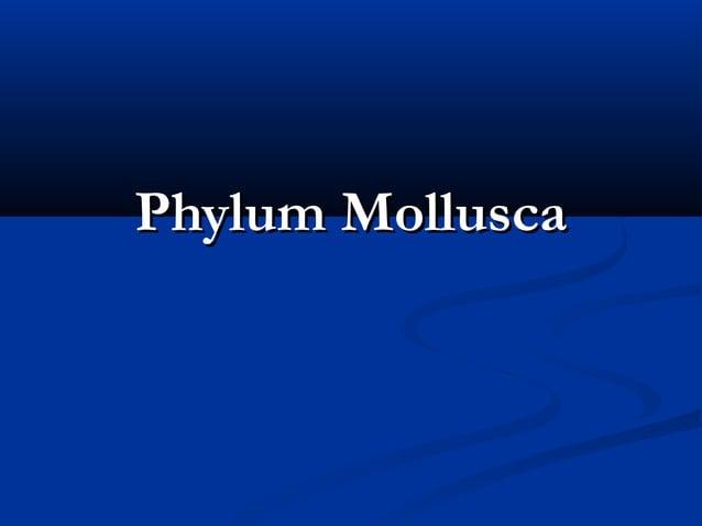 Phylum MolluscaPhylum Mollusca