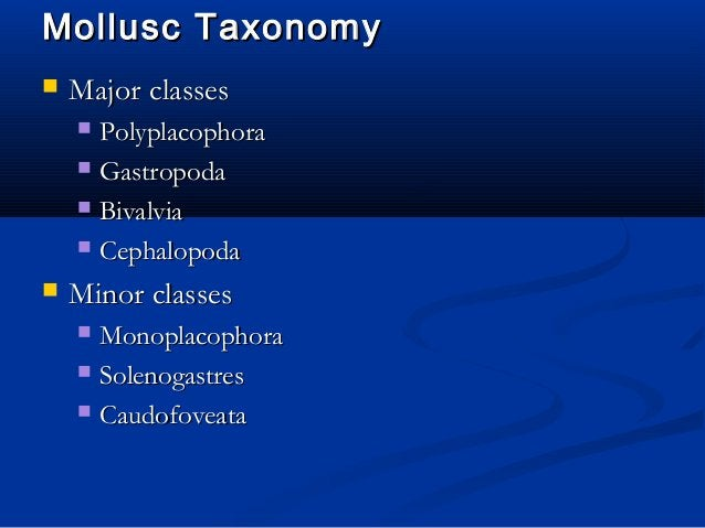 Mollusc TaxonomyMollusc Taxonomy  Major classesMajor classes  PolyplacophoraPolyplacophora  GastropodaGastropoda  Biva...