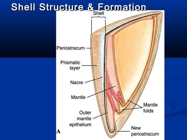 Shell Structure & FormationShell Structure & Formation