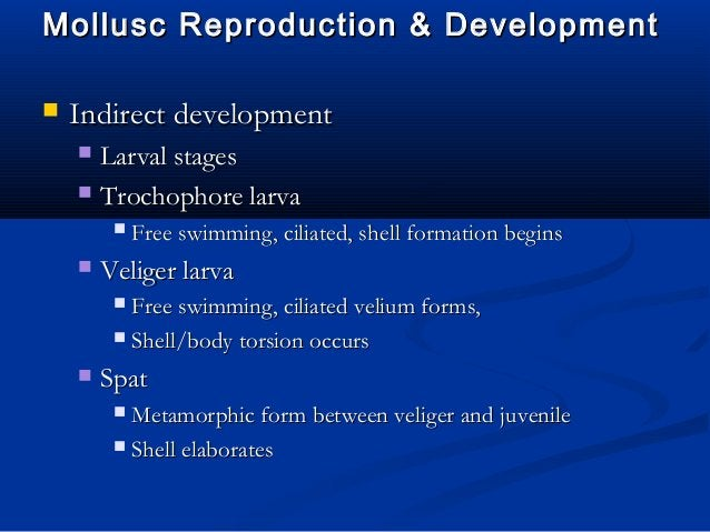Mollusc Reproduction & DevelopmentMollusc Reproduction & Development  Indirect developmentIndirect development  Larval s...