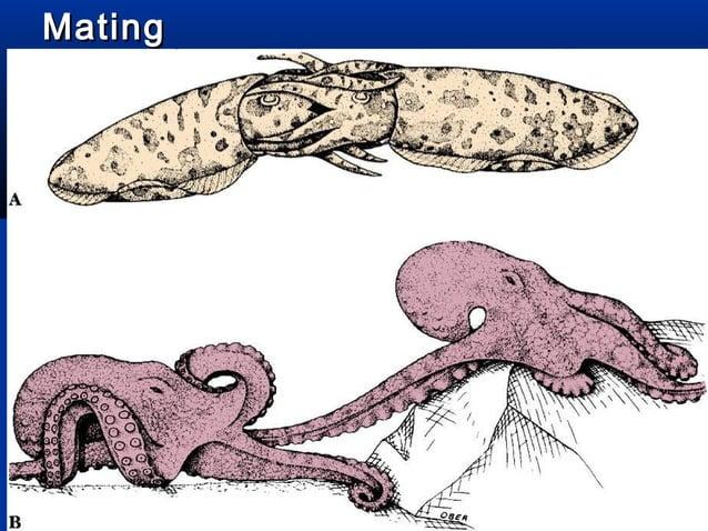 Direct Development in CephalopodsDirect Development in Cephalopods