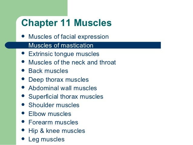 Chapter 11 Muscles   Muscles of facial expression   Muscles of mastication   Extrinsic tongue muscles   Muscles of the...