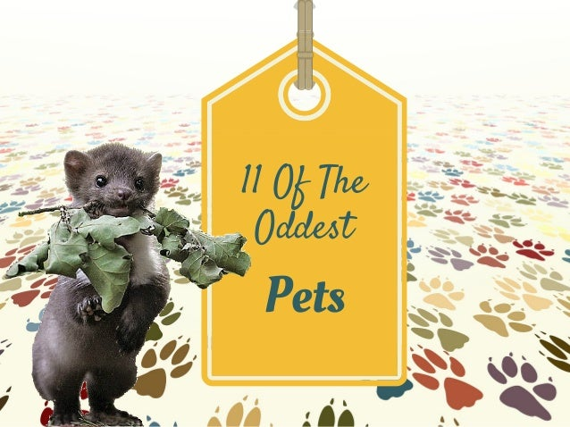 11 Of The Oddest Pets