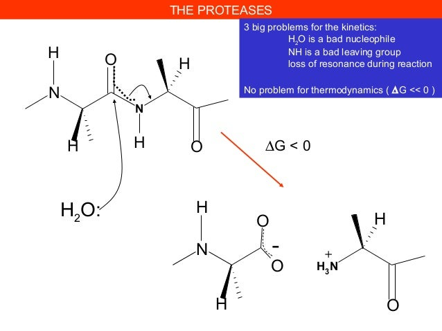THE PROTEASES3 big problems for the kinetics:H2O is a bad nucleophileNH is a bad leaving grouploss of resonance during rea...