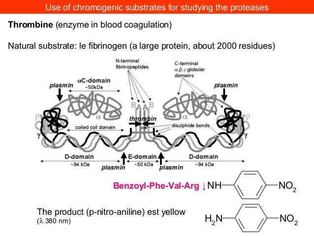 Use of chromogenic substrates for studying the proteasesThrombine (enzyme in blood coagulation)Natural substrate: le fibri...