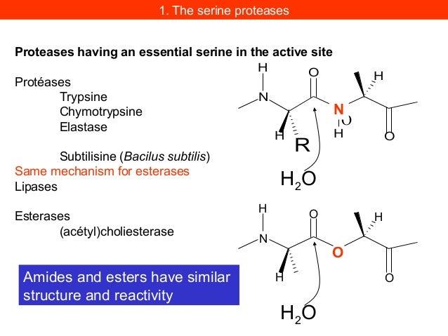 Identification of active serine in serine proteasesAn Unusually Reactive Serine in ChymotrypsinChymotrypsin is inactivated...