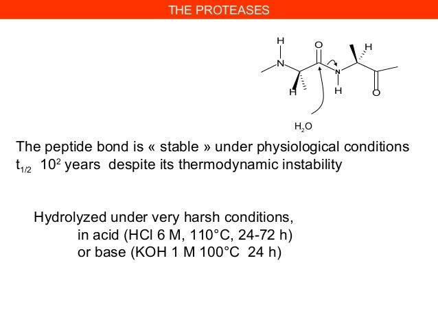 NNHO HHOHH2OHydrolyzed under very harsh conditions,in acid (HCl 6 M, 110°C, 24-72 h)or base (KOH 1 M 100°C 24 h)The peptid...