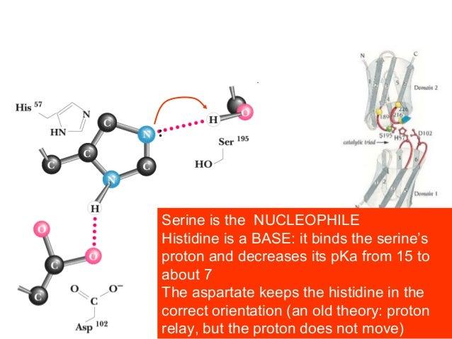 An example of CONVERGENT evolutionTrypsinSubtilisinbut identical active site!