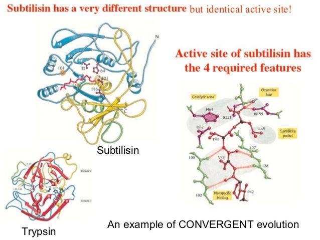 Évolution convergenteCONVERGENT evolution